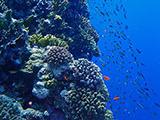 St John's Coral