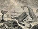 Old print of whales
