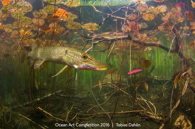World of a Pike, 1st Place Cold Water by Tobias Dahlin