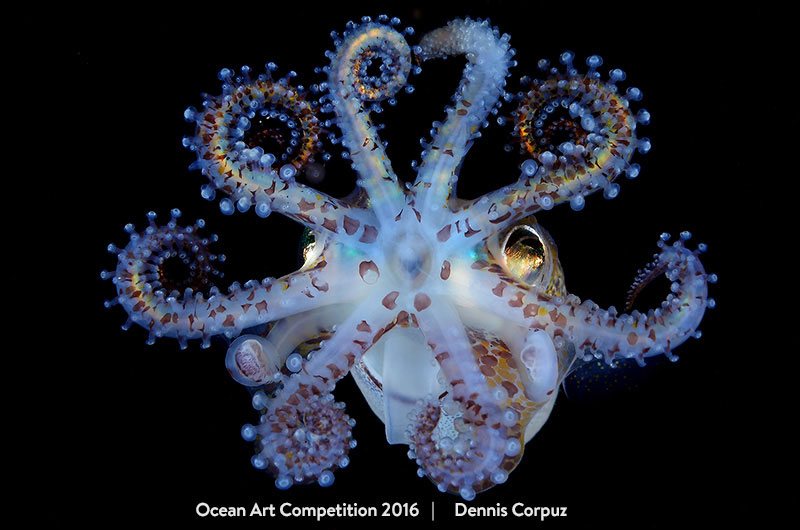 Amazing Squid by Dennis Corpuz