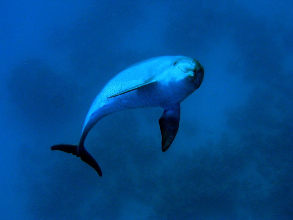 Whales And Dolphins Have Rich Human Like Cultures And