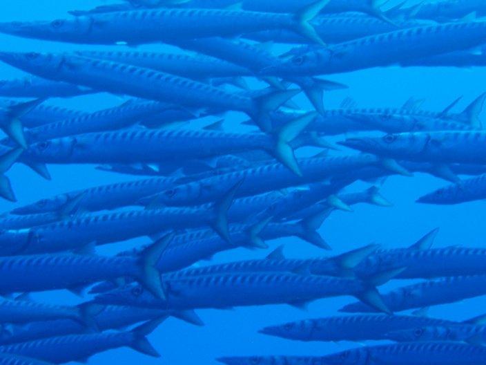 How Healthy Are Mediterranean Rocky Reefs Scuba News