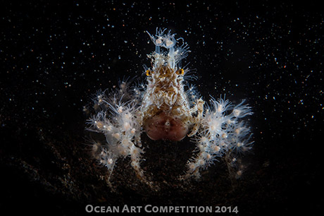 Electric Spider Crab by Nonna Pokras