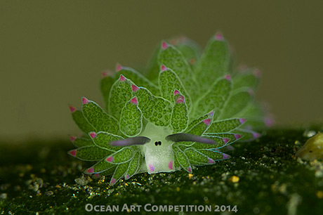 Award winning nudibranch photo