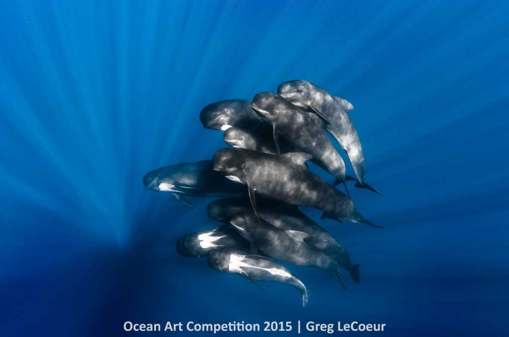 Pilot whales in Nice, France
