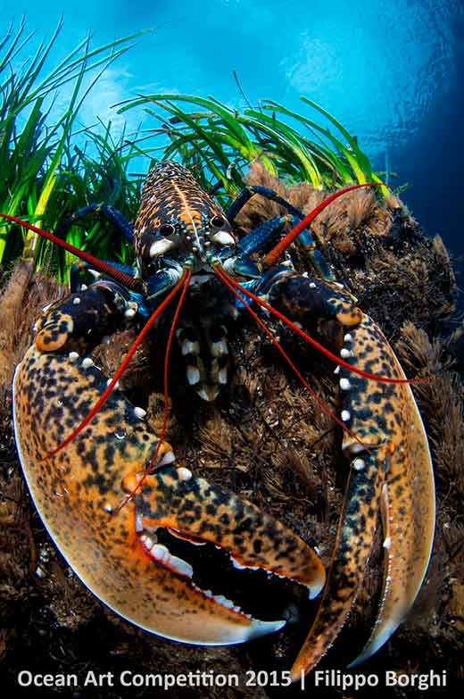 Lobster taken on Giannutri Island, Italy - 3rd place portrait category