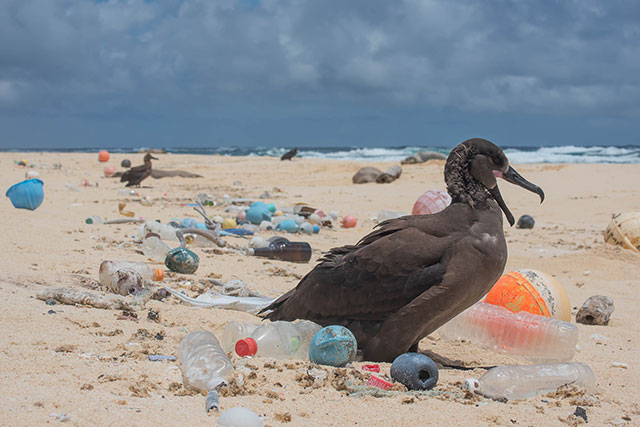 Bird surrounded by plastic