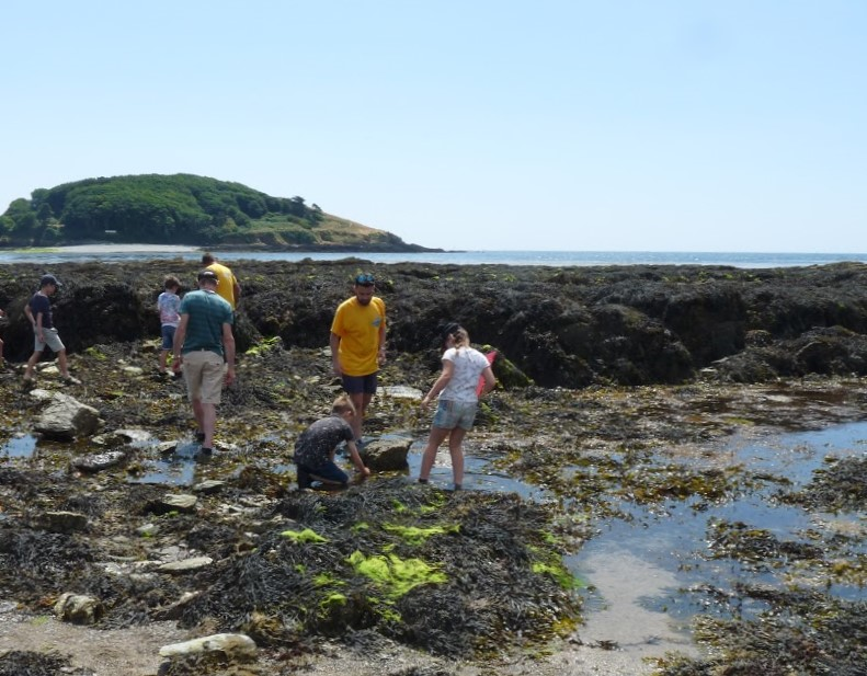 Rock Pool Project beach survey at Hannafore, Looe