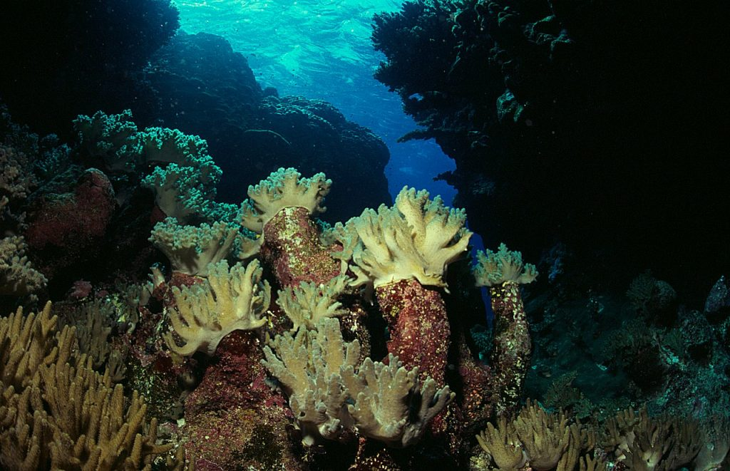 Gota Baraka, Red Sea by Tim Nicholson