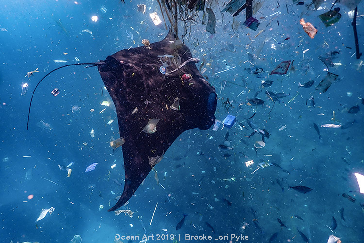 "3rd Place Conservation - Brooke Lori Pyke  ""Plastic Soup"""