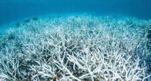 Bleached coral on Great Barrier Reef, Australia by Brett Monroe Garner