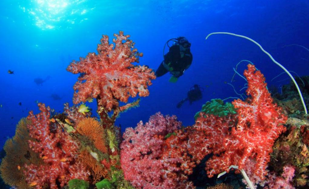 Terrific Diving At The Deep South Atolls Of The Maldives