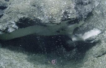 Undersea Methane bubbles