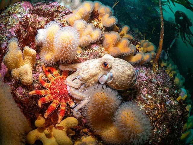 Octopus scene in Scotland