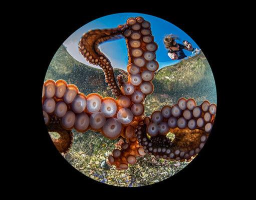 Octopus Selfie
