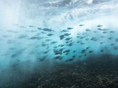 Researchers use robomussels to monitor climate change