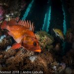 SoCal Winners Underwater Photography Competition