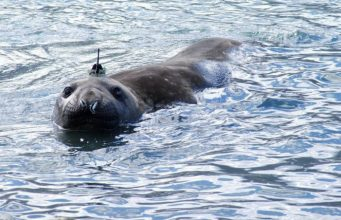 Tagged seal by Lars Boehme