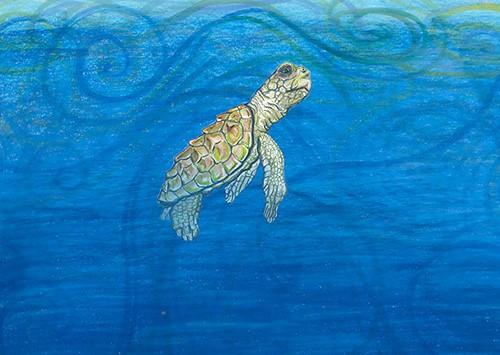 Painting of a juvenile loggerhead turtle